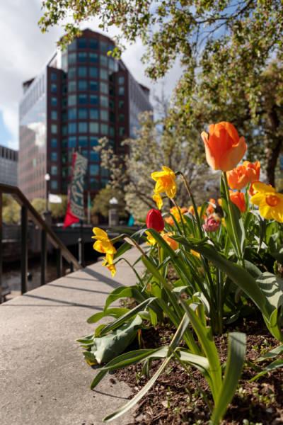 Spring Along Canal Walk, 2019