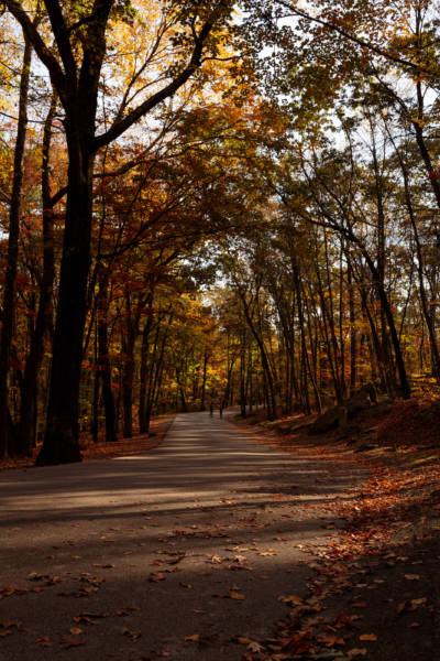 Golden Fall Morning in Lincoln Woods, 2020