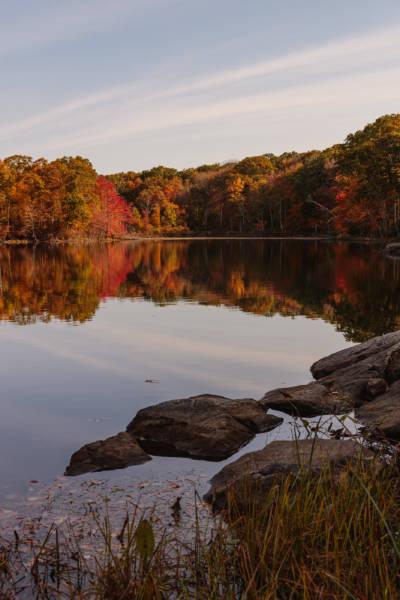 Fall Morning at Olney Pond, 2020