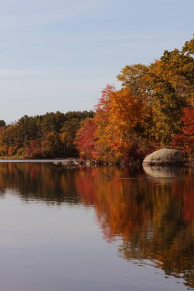 Autumn at Olney Pond, 2020