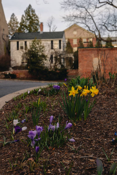 First Bloom on College Hill, 2021