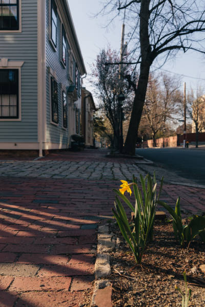 Spring Afternoon on Benefit Street, 2021